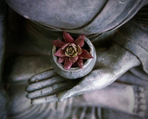 Buddha mit Blume 3zu2